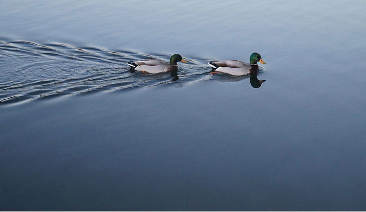 Wyszukiwarka Duck Duck Go - zdjęcie