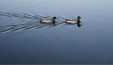 Wyszukiwarka Duck Duck Go